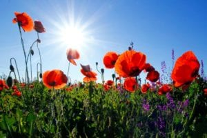 funeral homes in Shelby Charter Township, MI